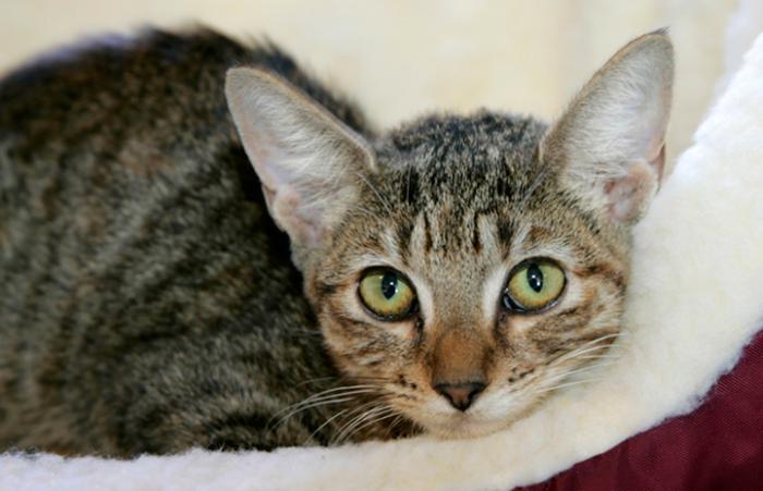 Rescued cat at Hurricane Katrina rescue effort