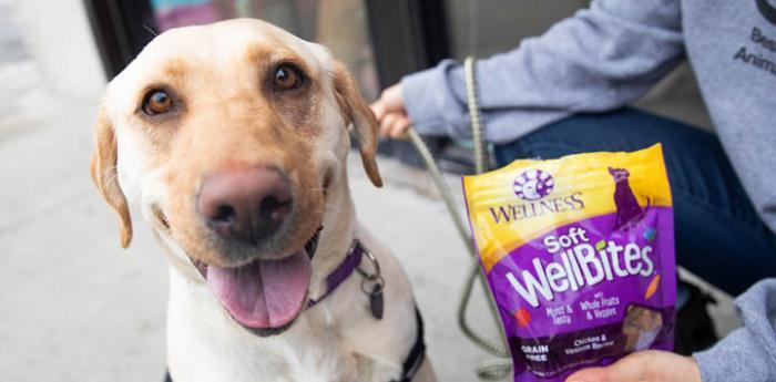 a golden Labrador sitting beside a bag of treats