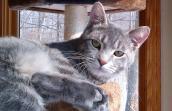 Johnny Depp the cat from Free Roaming Feline Program