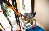 Toys helped stop Penelope's self-destructive behavior