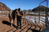 Dillon the horse and Ann