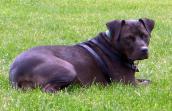 Halle the Vicktory dog