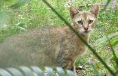 Miss Patton Street, an orangish brown feral tabby cat